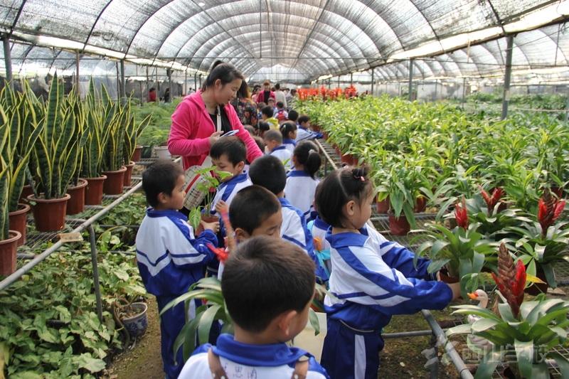今早,西山学校西山幼儿园门口就回荡着孩子欢乐的笑声,孩子们在老师的带领来到了福清市环球园艺进行户外扩展活动。活动中,老师向孩子们介绍了植物的种类、名称、生长过程,让孩子们懂得如何爱惜植物。虽然天气有些热,但孩子们学习的热情并不受影响,经过一个多小时的学习,孩子们加深了对各种植物的了解,对植物的喜爱之情也大大加深。仔细的观察后,孩子们挑选出了自己喜欢的植物。一块,两块,三块孩子们仔细地数钱,在老师的帮助下购买了自己喜欢的植物。